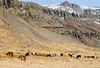 Iceland-Breiðdalshreppur-Icelandic horses and waterfalls.