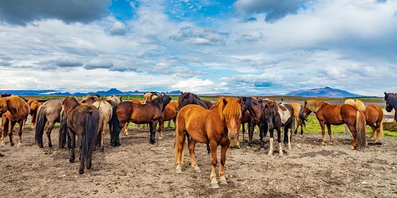 Iceland-Gullfoss-Horse corral