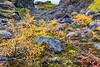 ICELAND-Jökulsárgljúfur