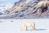 Iceland-Eyjafjallajökull-White on White