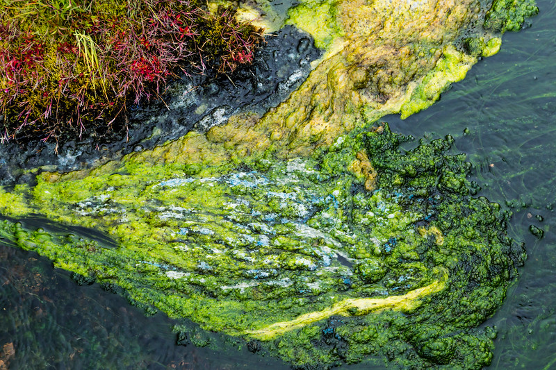 Iceland-Highlands-Fjallabak Nature Reserve-Landmannalaugar-Algae
