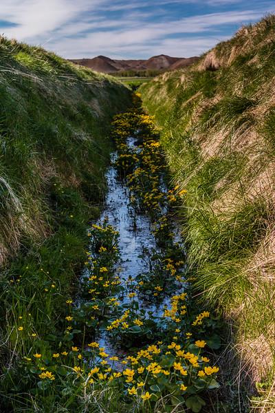 Iceland-Breidbolsstadur-Drainage ditch