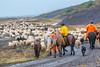 ICELAND-Kalmanstunga-Sheep roundup