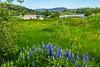 Iceland-Fludir-Greenhouses