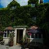 ivy clad exterior of best western hotel
