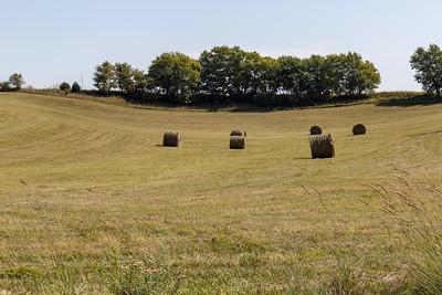 Bales of hay ready for storage