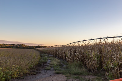 Irrigation system on corn field. Soybeans on the left.