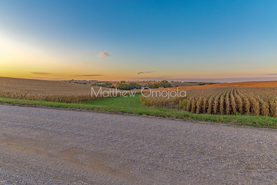 Sunset skyline on mature mega corn maize farm. The neat rows of produce