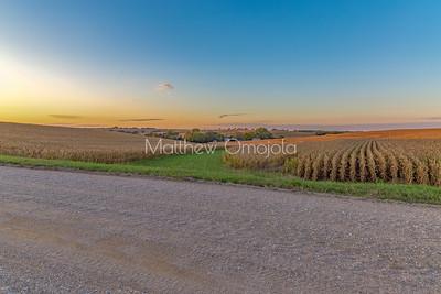 Sunset skyline on mature mega corn maize farm. The neat rows of produce