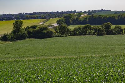 Mega corn fields of young plants