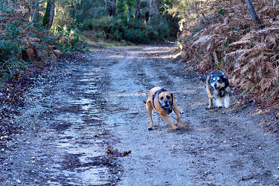 Running dogs #3
