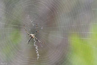 In the web ; Dans la toile