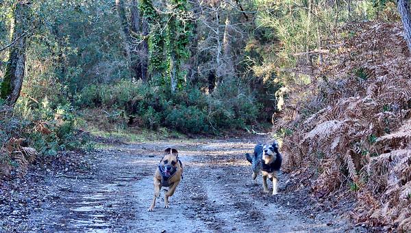 Running dogs #1