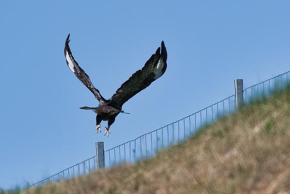 Take flight ; Prendre son envol
