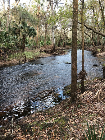 Blackwater Creek - 8 of 8 2018 Hillsborough Hiking Spree