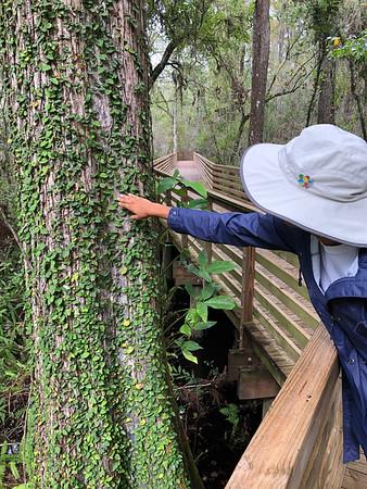 Eureka Springs Park - 3 of 8 for the Hillsborough Hiking Spree
