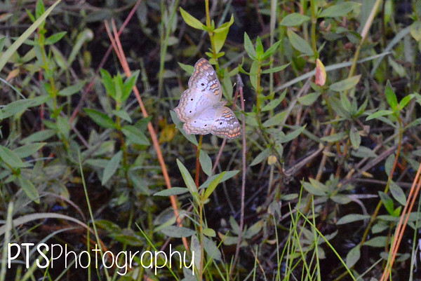 Myakka State Forest (again) 07.29.17