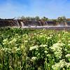 Spring run off on the Umatilla River
