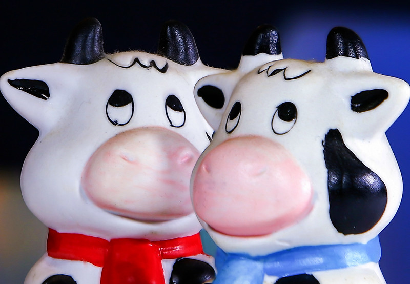 Porcelain cows