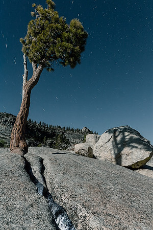 Lighting up a crack leading to this little guardian of the hillside -- Olmsted Point / Yosemite