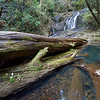 Above Casurina falls, Dorigo NP