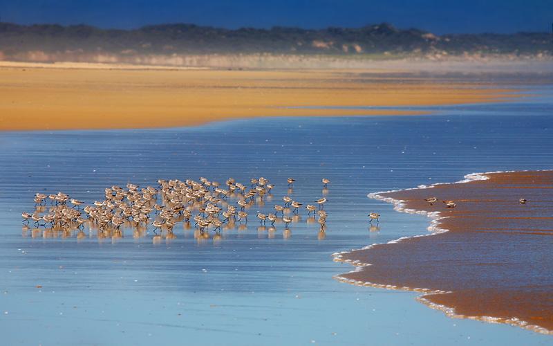 Birds on the sand.  Sandy Point beach