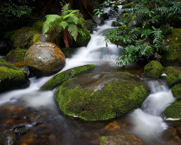 Badger Creek, Dandenongs