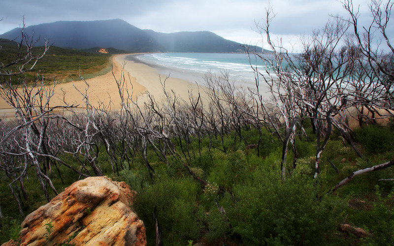 Oberon Bay.  This is about 2 hours walk from Tidal River but it has to be one of the best walks in Australia.  It is just starting to rain, but that is common here.