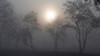 Tea plantation on the morning fog