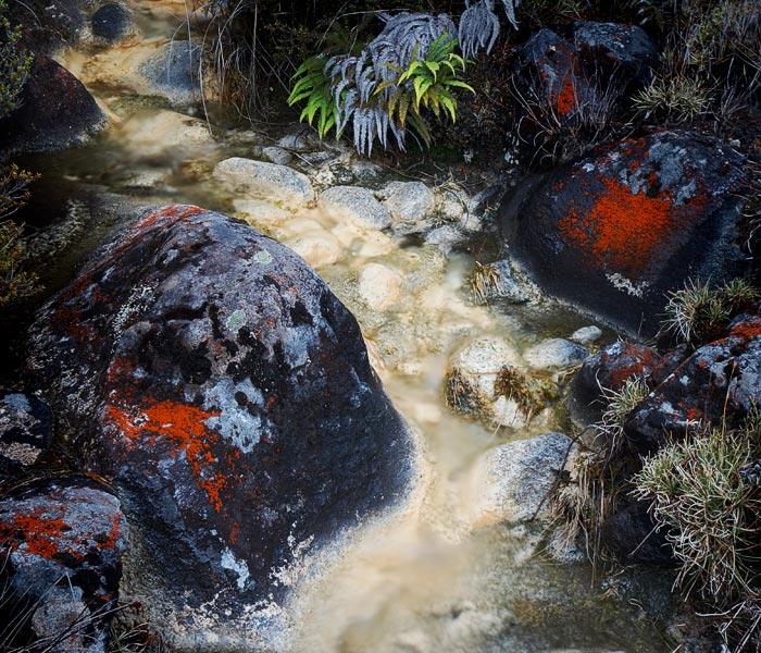 Lichen on rock, Tongariro