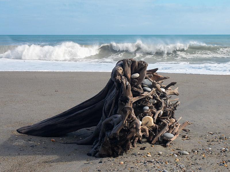 The log, West Coast