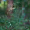 Grass growing in dense shade