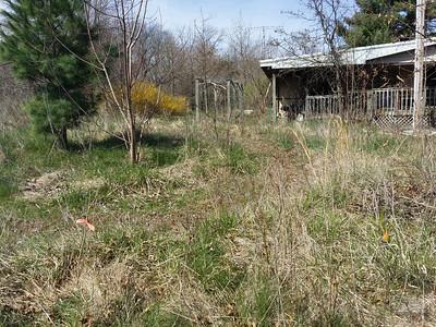 Three pecans on north side
