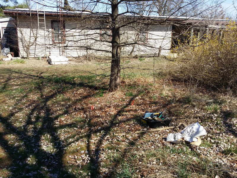 Two serviceberry on south edge of south yard