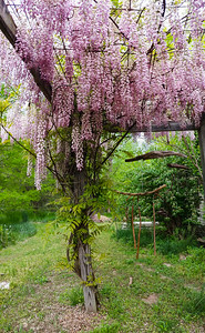 First stop was under the wisteria trellis in the south yard. Lots of bumble bees working on it, plus other smaller insects.