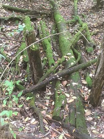 Mossy log studio location