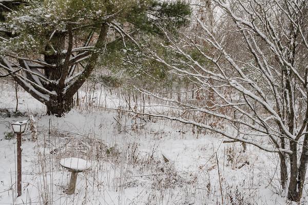 Snow in front yard_DSC0766