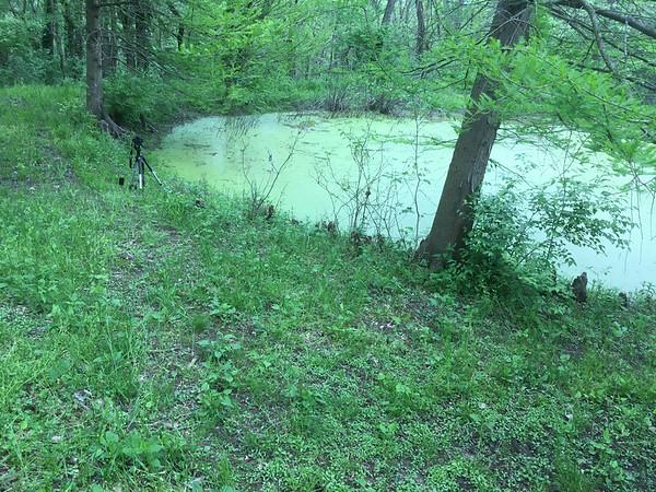 nature sounds shooting set up-00001-IMG_9402
