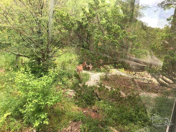 Deer off [atj