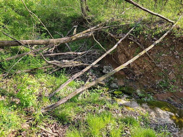 Tree finally settled down across creek