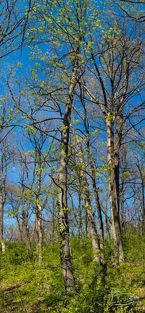 tree portrait-00002-20210419_162430-Pano