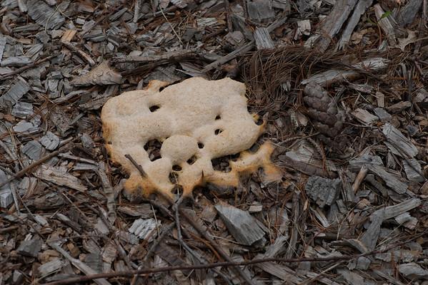 Fungus?