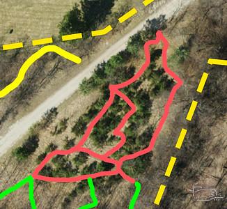 The Cedar Forest Trail