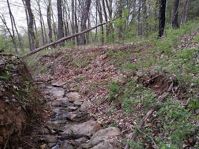 Bedrock in forest gully