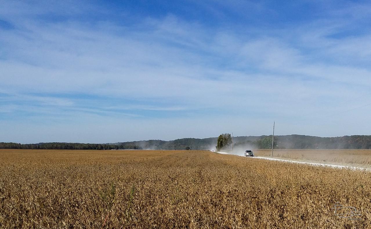 Missouri river bottoms -- soy bean crop