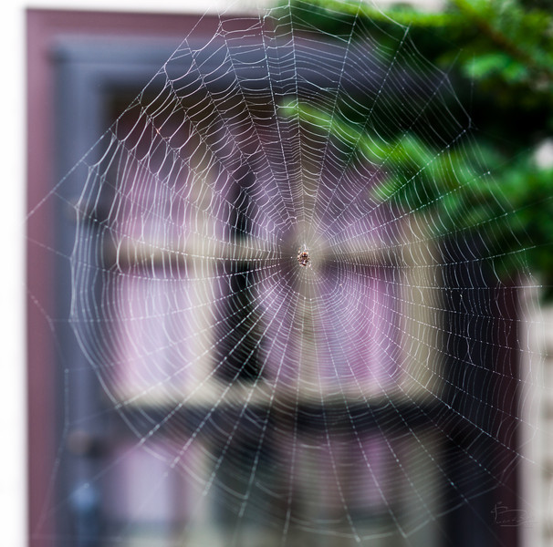 Spider guards the door.