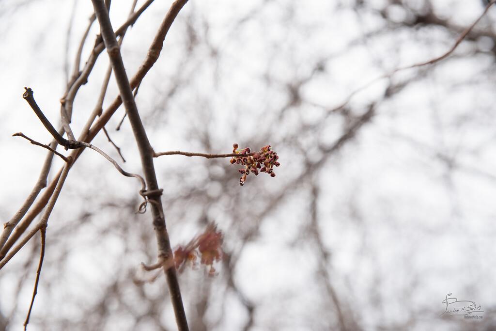 alternate branching