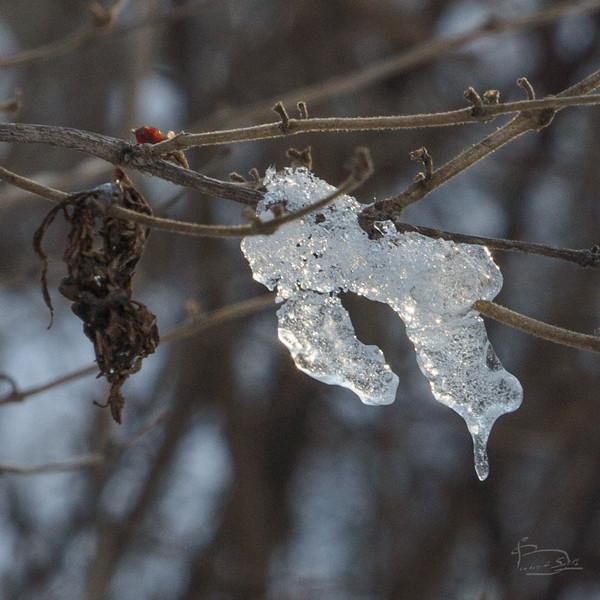 ice on a twig