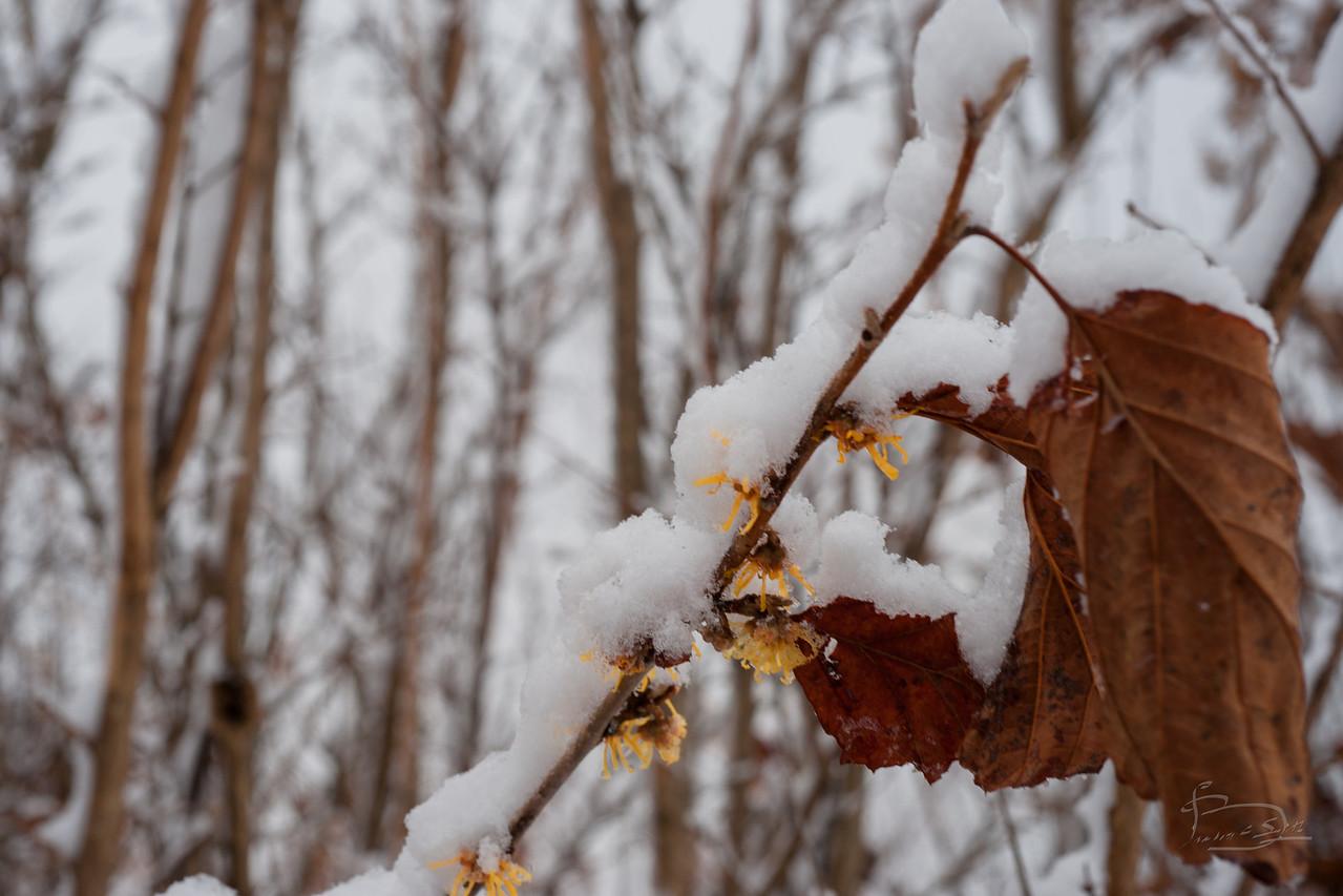 fluffy_snow_046_DSC07760