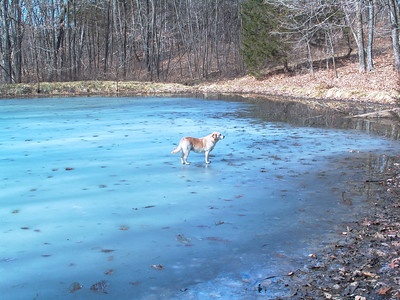lower pond, 2004